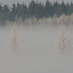 "photo ""Frosty mist... On the countryside"""