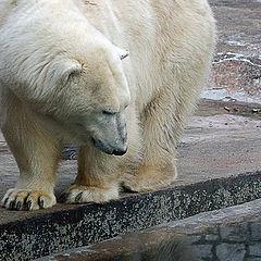 """album """"The Moscow zoo"""""""