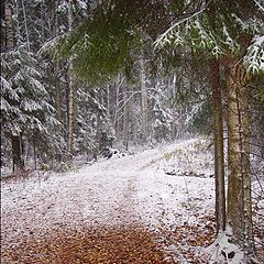"""photo """"The first snow 2"""""""