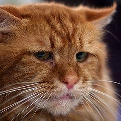 """фото """"выставка кошек #3"""""""