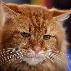 """фото """"выставка кошек #4"""""""