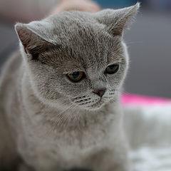 """фото """"выставка кошек #5"""""""