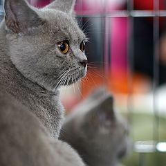 """фото """"выставка кошек #8"""""""