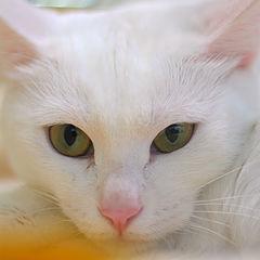 """фото """"выставка кошек #10"""""""