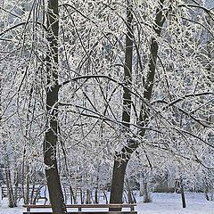 "photo ""Winter Park"""