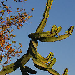 "photo ""Curly Cactus"""