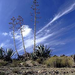 """фото """"Desert of Cabo de Gata 1"""""""