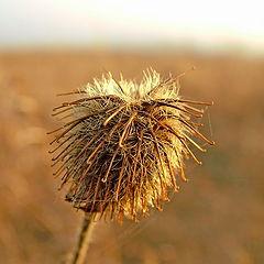 "photo ""Wind in a head"""