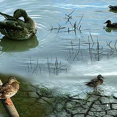 """фото """"Duck mix"""""""