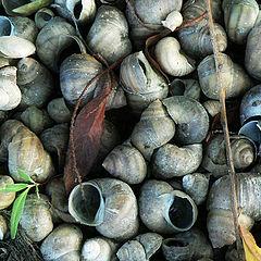 """фото """"shells"""""""