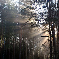 """photo """"The forest wakes up"""""""