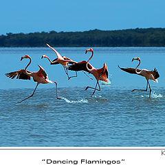 """photo """"Dancing Flamingoes"""""""