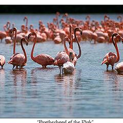 "photo ""Brotherhood of the Pink"""
