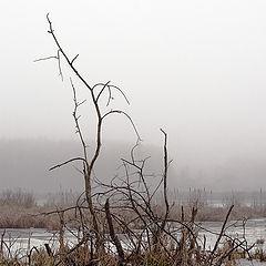 """фото """"Зимнее болото"""""""