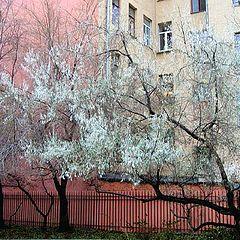 """photo """"White willow"""""""