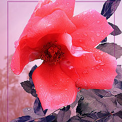 """photo """"Autumnal"""""""