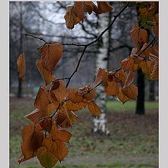 """фото """"Мне нравятся осени тусклые краски..."""""""