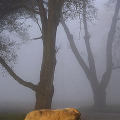 """photo """"Rural etude"""""""
