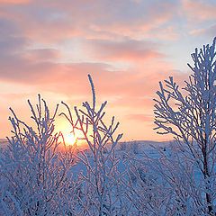 """фото """"Just a winter sunset"""""""