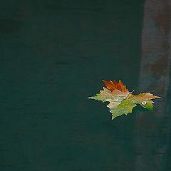 "photo ""La Feuille Morte"""