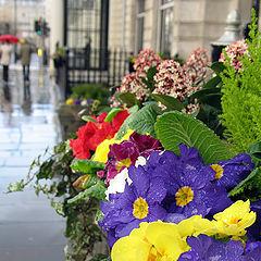 "photo ""London rain"""