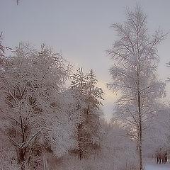 """фото """"Первый снег в Александрино"""""""