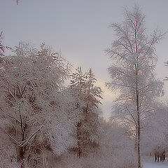 "photo ""Alexandrino park: The first snow"""