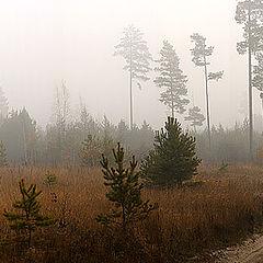 """photo """"Mistical landscape"""""""