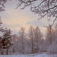 "photo ""Alexandrino park: The first snow 2"""