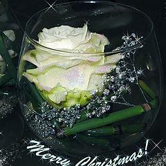 "photo ""Merry Chrismas!"""