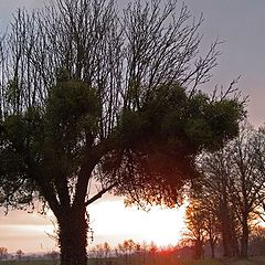 """фото """"The first sunrise of winter"""""""
