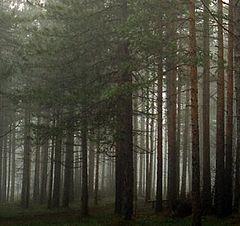 """photo """"lonely tree"""""""