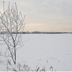 """фото """"Snow silence..."""""""
