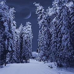 "фото ""В темно-синем лесу..."""