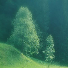 """фото """"Волшебная поляна"""""""