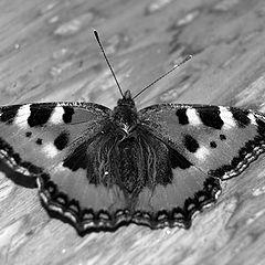 """фото """"sleeping butterfly"""""""
