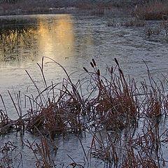 """фото """"Frozen morning"""""""