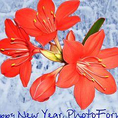 """фото """"С Новым годом, ФотоФорум!"""""""