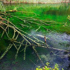 "фото ""Plitvicka National Park"""