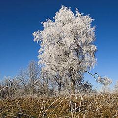 "фото ""Frosty morning"""