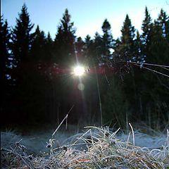 "photo ""morning light"""