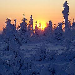"""фото """"Готика зимы"""""""
