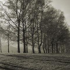 "фото ""The trees"""