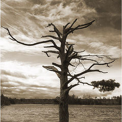 """фото """"Ghost tree"""""""