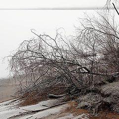 "photo ""Peno Lake in warm January"""
