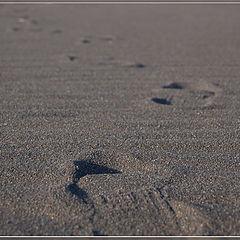 """фото """"Следы на песке..."""""""