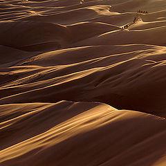 "фото ""The desert"""