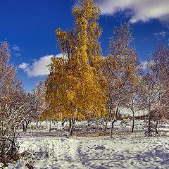 """фото """"The golden tree"""""""
