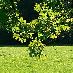 "photo ""Chlorophyll or last year sonne"""