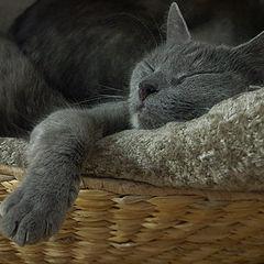 "photo ""Sweet dreams"""